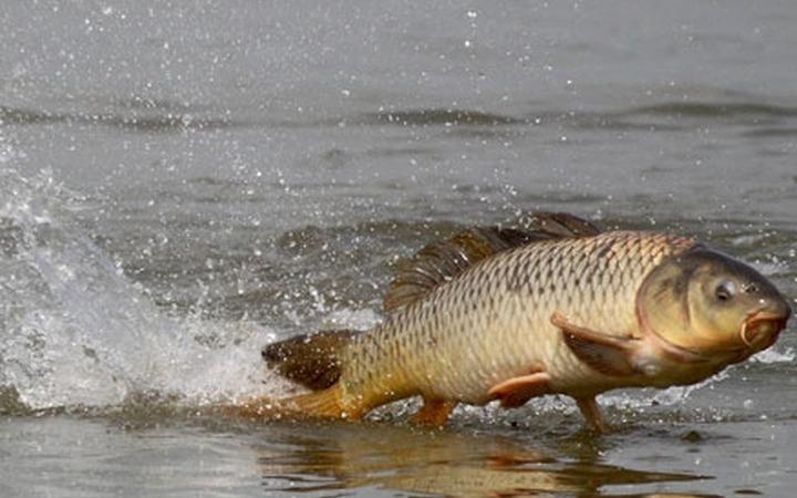 Аборигены Камчатки готовятся к Дню первой рыбы