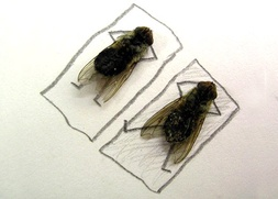 В Миассе похоронили мух, тараканов и комаров