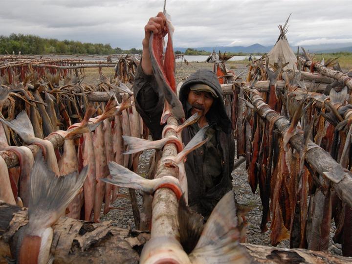 Коренные народы Ямала стали есть в два раза меньше рыбы