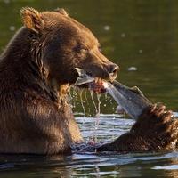 Соседи оленя, братья медведя
