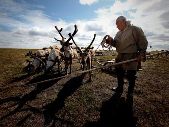 Во Всемирном конгрессе оленеводов примут участие 28 делегаций из России