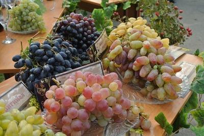 Фестиваль виноградарства и виноделия проведут в Ростовской области