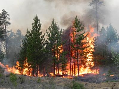 Бурятский шаман осужден за ритуальный поджог леса