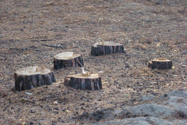 Карельские виртуозы скосили заполненную пнями поляну