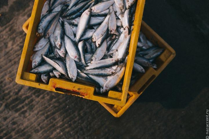 Хабаровская община КМНС не получила права рыбачить, почта не доставила их заявки