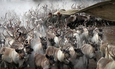 На Ямале появятся дипломированные оленеводы