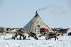 Ученые четырех стран выпустят пособие по преподаванию северных языков