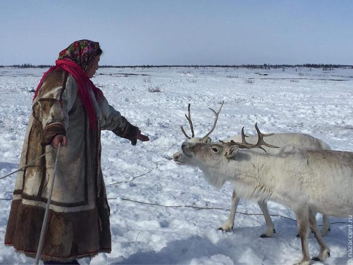 Путин призвал не допустить повтора экологической катастрофы в Норильске