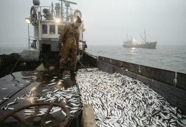 Рыбаки Камчатки могут лишиться работы из-за квот на ловлю для коренных малочисленных народов
