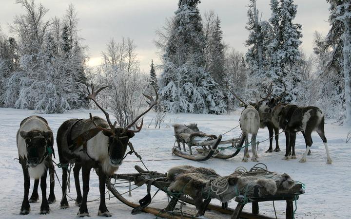 В Мурманской области отметят День оленевода и Праздник Севера