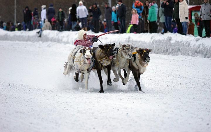 Оленьи бега на Празднике Севера в Воркуте