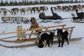 На Ямале появится российский центр оленеводства