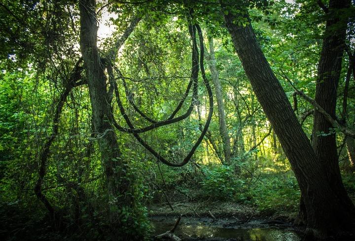После обращения лезгин к президенту в Дагестане займутся Самурским лесом