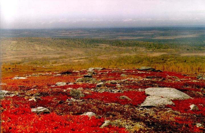 Якутский оленевод выжил после 44 дней в тундре без оружия