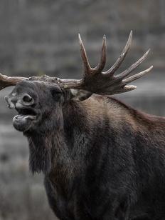 В передаче земли охотникам не нашли нарушений прав саамов
