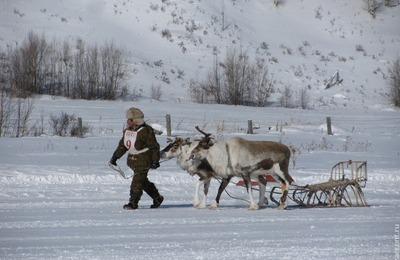 В Якутии создадут охраняемую природную территорию для диких северных оленей