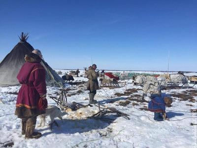 Оленевод отогнал медведя от стойбища снегоходом