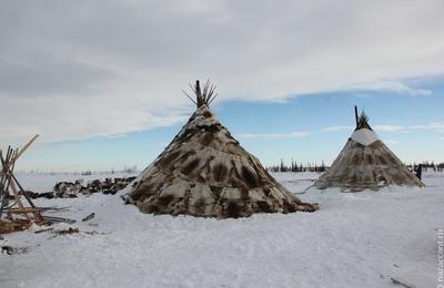 Ямальских кочевников предостерегли от посещения населенных пунктов из-за коронавируса