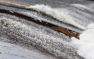 На Чукотке впервые за девять лет выделили участки для традиционного рыболовства