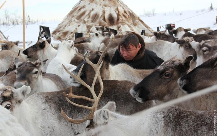 Ямальских тундровиков обучат азам компьютерной грамотности
