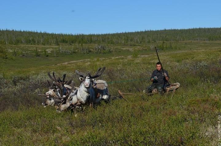 Эксперт: Восстановление сгоревших оленьих пастбищ в Эвенкии может занять несколько десятилетий