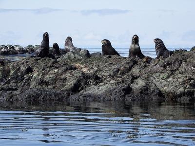 Алеуты Командорских островов отметят День промысловика
