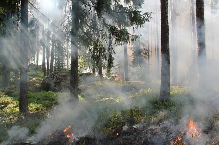 В Якутии горит лес неподалеку от национального села