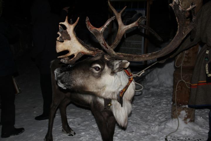 Побывавший на Ямале шведский журналист огорчился из-за вымирания ненецкой культуры