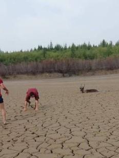 Оленеводы пожаловались на золотодобытчиков в Алданском районе Якутии