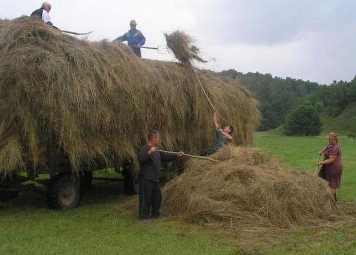 В Волгоградской области 11 уроженцев Чечни подрались из-за земли под сено