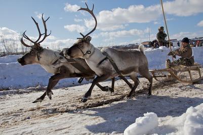 В Амурской области отпраздновали День оленевода