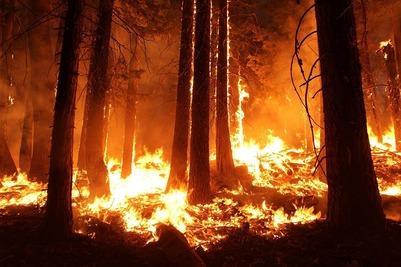 На Камчатке загорелся лес вблизи эвенского села