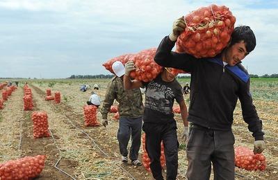 Минтруд не хочет менять число трудовых мигрантов в 2018 году