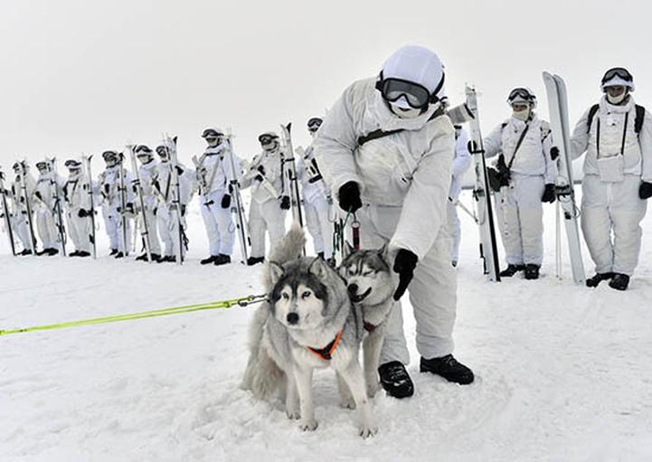 Военнослужащих Северного флота научили управлять оленьими и собачьими упряжками