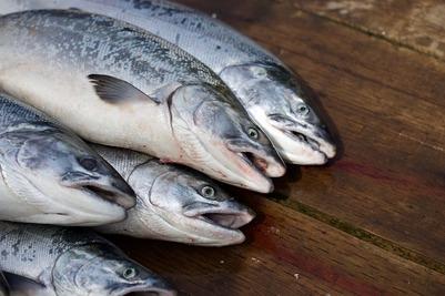 Хабаровские эвенки пожаловались на запрет ловить рыбу из-за недочетов в документах