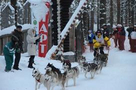 В Карелии открывается сезон гонок на собачьих упряжках