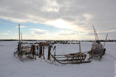 На Ямале вручат гранты на сохранение традиционного образа жизни коренных народов