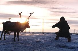 Камчатские оленеводы отметят профессиональный праздник