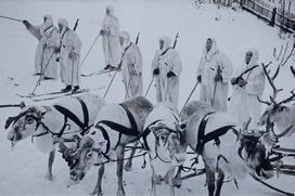 День фронтового оленя предложили учредить на Ямале