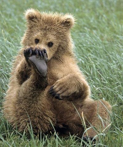 На Ямале чествуют Медведя