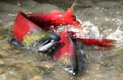 Минсельхоз пополнил список оснований для отказа коренных народам в рыболовстве