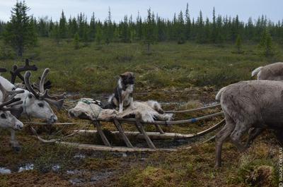 Земли традиционного природопользования появятся в Коми