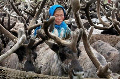 На поддержку коренных малочисленных народов Севера выделили 119 миллионов рублей