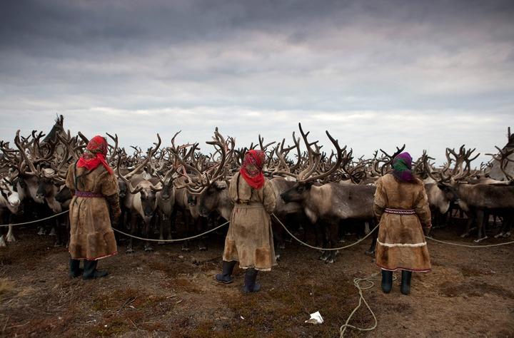 В НАО разработали Концепцию развития коренных народов