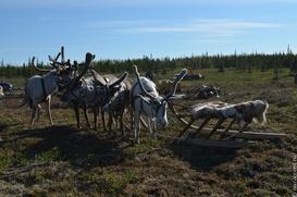 Чукотский оленевод пропал из-за непогоды