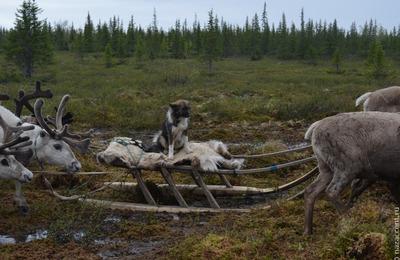 Этнографический парк с чумом и тотемными столбами появится на Ямале
