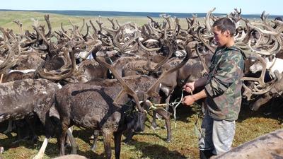 В Югре разработали рекомендации поведения на территориях проживания народов Севера