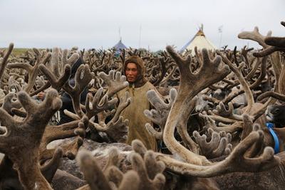 В Югре оленеводы посоревнуются за снегоход