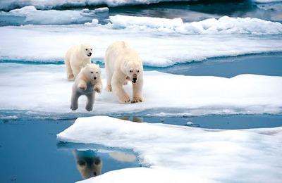 Представители регионов: туристов привлекают в российскую Арктику национальные парки
