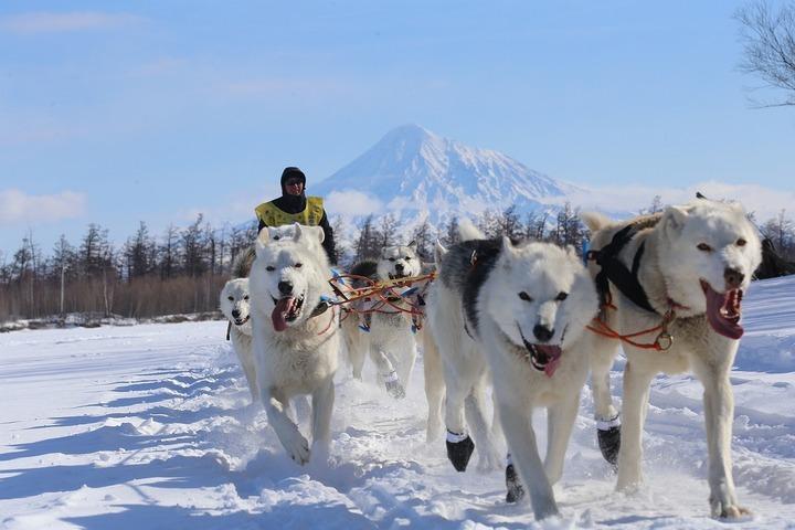 """Северяне попросили вернуть гонку на собачьих упряжках """"Берингия"""" на традиционный маршрут"""